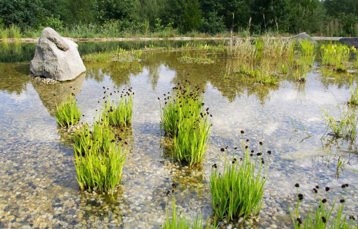 Strefa z roślinami przy stawie kąpielowym